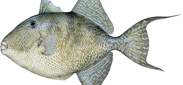 fish images Bottom