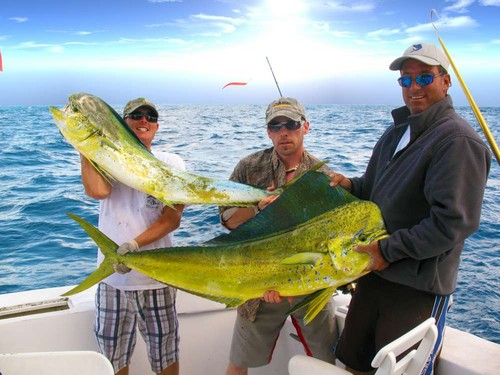 Tampa deep sea fishing charters tampa bay offshore for Tampa deep sea fishing