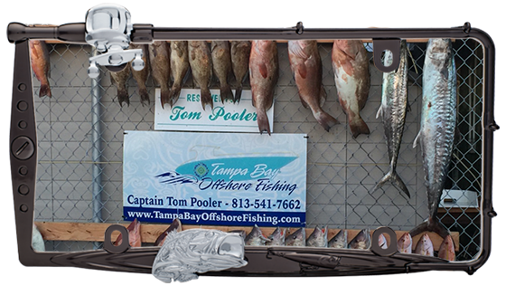 gulf of mexico charter fishing