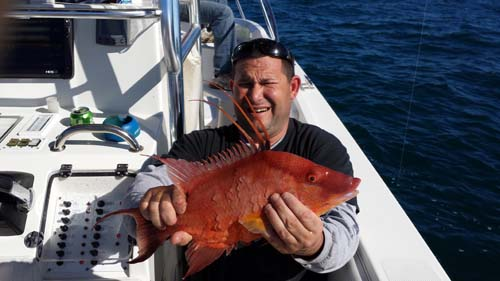 hogfish carters