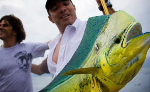 mahhi mahi fishing charters in tampa bay florida