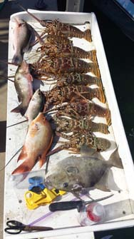 tampa deep sea fishing charters
