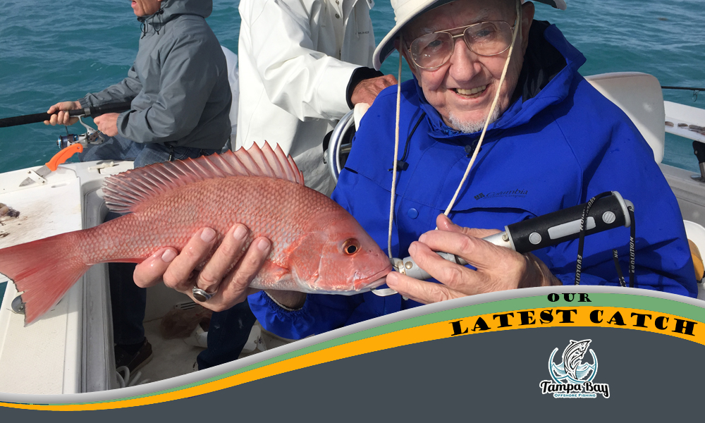 Snapper charters tampa bay for Tampa deep sea fishing