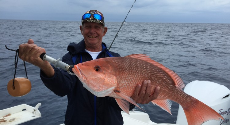 american red snapper charters tampa bay